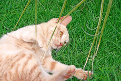 Tawny cat. On green grass Stock Photo