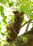 Tawny Fish Owl perched on a tree Stock Photography