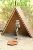 Tawny Owl Fotografia Stock