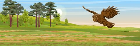 Tawny owl flying over the meadow. Pine, spruce trees and grass. Wild animals and birds of Eurasia and Scandinavia. Strix aluco. Realistic Vector Landscape vector illustration