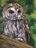 Tawny Owl, Oil Pastel Painting. This is my original, freehand, oil pastel painting of a Tawny Owl perched in a tree Stock Image