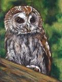 Tawny Owl, Oliepastelkleur het Schilderen Stock Afbeelding