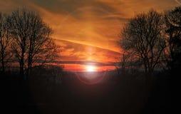 Tawny Sunrise através das árvores Fotos de Stock Royalty Free