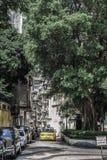Taxi amarillo que viene debajo de un árbol grande Foto de archivo libre de regalías