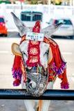 Taxi célèbre d'âne Photographie stock libre de droits