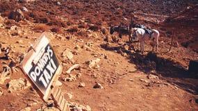 Taxi de los burros en Creta Fotos de archivo