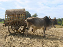 Taxi de touristes dans Mingun, Mandalay, Myanmar Photographie stock libre de droits