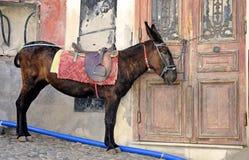 Taxi del burro Fotografía de archivo libre de regalías