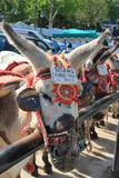 A taxi donkey Stock Photo