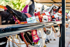 Taxi famoso del burro Imágenes de archivo libres de regalías