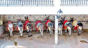 Taxi famoso del burro Foto de archivo libre de regalías