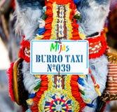 Taxi famoso dell'asino Fotografie Stock Libere da Diritti