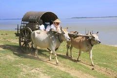 Taxi turistico in Mingun, Mandalay, Myanmar Immagine Stock