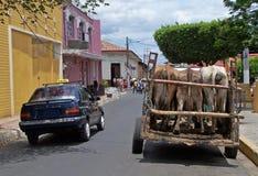 Taxi y vacas. Imágenes de archivo libres de regalías