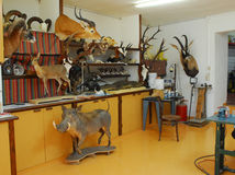 taxidermy Arkivbilder