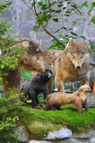 The taxidermy animals Abkhazia July 2016 Royalty Free Stock Image