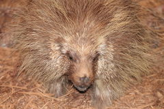 Taxidermy Wildlife. Photo of s Taxidermied Animal Stock Image