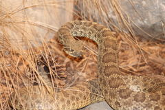 Taxidermy Wildlife Stock Image