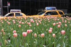 Taxis et tulipes de New York images stock
