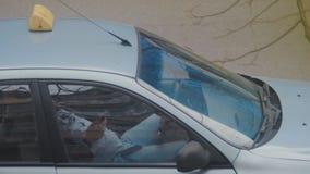 Taxista que descansa em seu carro estacionado ao verificar seu telefone celular à disposição A maioria de ordens são recebidas do vídeos de arquivo