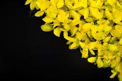 Taxture y wallpeper amarillos del fondo del negro de la flor de la naturaleza ascendente cercana fotografía de archivo