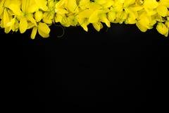 Taxture y wallpeper amarillos del fondo del negro de la flor de la naturaleza ascendente cercana fotos de archivo libres de regalías