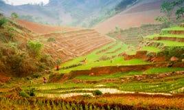 TaXua, Sonla,越南 免版税库存照片