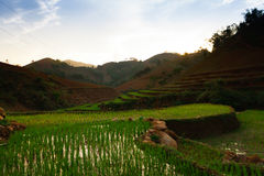 TaXua Sonla, Vietnam Royaltyfria Bilder