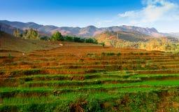 TaXua, Sonla, Vietnam stockbilder