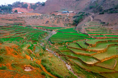 TaXua Sonla, Vietnam Arkivfoto