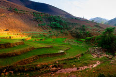 TaXua, Sonla, Vietnam stockfotografie