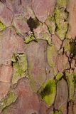 Taxus baccata tree bark stock photo