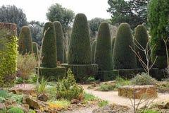 Taxushoutpijlers, Hidcote-Manortuin, het Afbreken Campden, Gloucestershire, Engeland stock foto