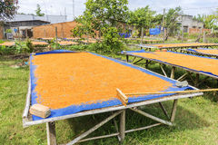 Tay Ninh Chili Shrimp Salt (Muoi Tom), província de Tay Ninh, Vietname Fotografia de Stock Royalty Free