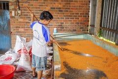 Tay Ninh Chili Shrimp Salt (Muoi Tom), Tay Ninh province, Vietnam Royalty Free Stock Images