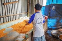 Tay Ninh Chili Shrimp Salt (Muoi Tom), Tay Ninh province, Vietnam Royalty Free Stock Photography