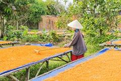 Tay Ninh Chili Shrimp Salt (Muoi Tom), Tay Ninh-provincie, Vietnam Stock Fotografie