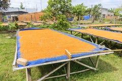 Tay Ninh Chili Shrimp Salt (Muoi Tom), Tay Ninh-Provinz, Vietnam Lizenzfreie Stockfotografie
