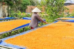 Tay Ninh Chili Shrimp Salt (Muoi Tom), Tay Ninh-Provinz, Vietnam Lizenzfreies Stockfoto