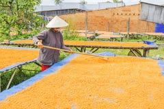 Tay Ninh Chili Shrimp Salt (Muoi Tom), Tay Ninh-Provinz, Vietnam Stockfotos