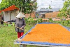 Tay Ninh Chili Shrimp Salt (Muoi Tom), Tay Ninh-Provinz, Vietnam Stockbilder