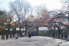 Tayasu-segunda-feira no parque de Kitanomaru, Chiyoda, Tóquio, Japão Fotos de Stock Royalty Free
