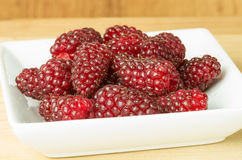 Tayberries on white plate Royalty Free Stock Photography
