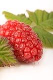 Tayberry und Blätter Lizenzfreies Stockbild