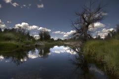 Taylor creek Zdjęcie Stock