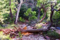 Taylor Creek, Kolob-Canions, Zion National Park, Utah royalty-vrije stock foto