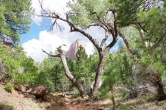 Taylor Creek, Kolob-Canions, Zion National Park, Utah stock foto
