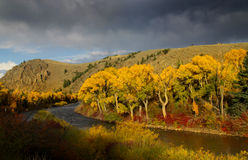 Taylor river. Scenic Taylor river in Colorado during autumn time Royalty Free Stock Photography
