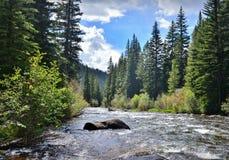 Taylor River Cittadino Forrest di Gunnison Immagini Stock Libere da Diritti
