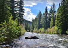 Taylor River. Gunnison National Forrest. Royalty Free Stock Images